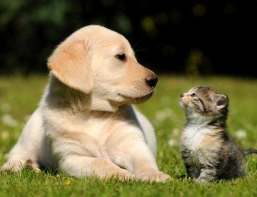 Una de cada 10 personas padece fobia a algún animal